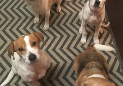 #stopbarking #stopjumping #bestcharlottedogtrainers #dogtrainingcharlotte