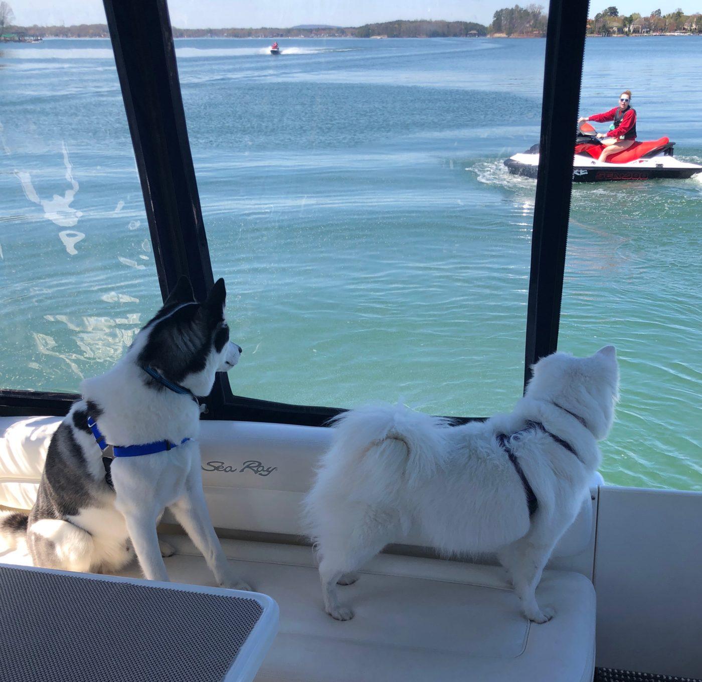 #huskytraining #americaneskimodogtraining #dogsonboat #nobarking #chalottedogtrainers